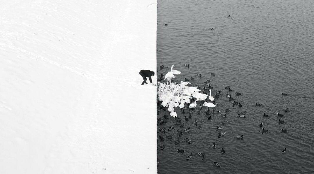 تضاد زیبای سیاه و سفید
