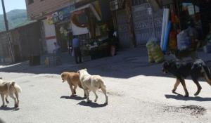 رژه سگهای ولگرد روی اعصاب مردم پاسارگاد