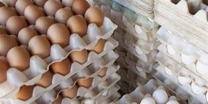 توقیف محموله تخم مرغ قاچاق در چابهار
