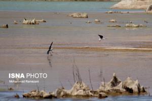کاهش بارندگیها، پرندگان مهاجر را به تالاب کجی نهبندان نکشاند