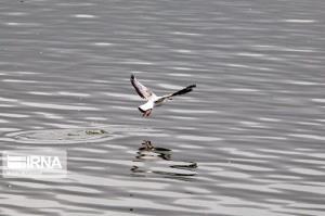 آنفلوآنزای فوق حاد پرندگان در تالابهای بویراحمد مشاهده نشده است