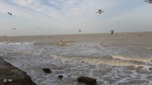هشدار به دریانوردان؛ خلیج فارس طوفانی است
