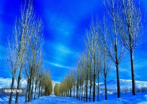 سوز سرما در زنجان