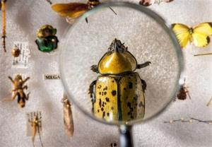 کردستان ۶ گونه جدید حشره به دنیا معرفی میکند