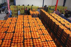 توزیع ۹۰۰ تُن میوه تنظیم بازاری از هفته آخر اسفند در مرکزی