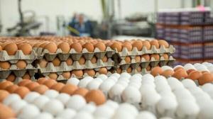 کشف ۹ تن تخم مرغ احتکار شده در زاهدان