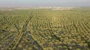 معاون بانک کشاورزی بوشهر: نخلستانهای استان بیمه آتش سوزی میشوند