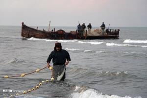 «کفال» بیشترین ماهی استخوانی صید شده توسط صیادان گیلانی