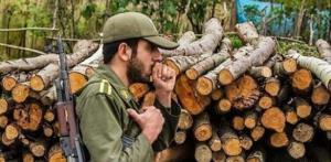 کشف ۳۹ تن چوب قاچاق در مهاباد