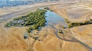 نابودی جنگل در بوشهر با ایجاد سایت میگو