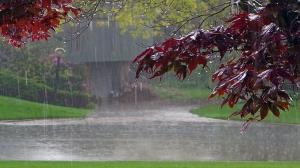 هوای ایلام امروز بارانی میشود