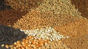 کشف دپوی میلیاردی بذرهای قاچاق کشاورزی در نقده