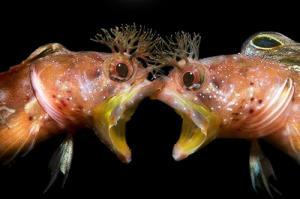 گشتی در میان موجودات اعماق اقیانوس
