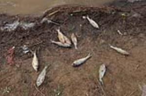 عکس/ تلف شدن ماهی ها در بند عبدل آباد بجنورد
