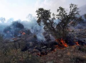 آتشسوزی ارتفاعات منطقه رزک جهرم مهار شد