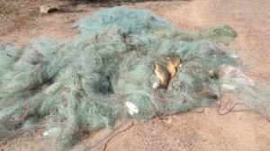 جمعآوری تورهای غیرمجاز ماهیگیری در سد درودزن