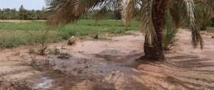 خسارت ۹۶ میلیارد ریالی بارندگی به بخش کشاورزی شهرستان کرمان