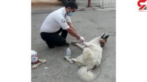 پناه بردن سگ زخمی به اورژانس جادهای باشت