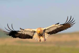 شناسایی بیش از ۵۰ درصد از پرندگان ایران در استان کردستان