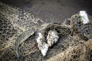 صید آبزیان در سمیرم ممنوع شد