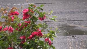 طراوت باران بهاری در گیلان