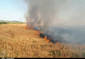 آتشسوزی مزارع میدان بزرگ پلدختر مهار شد