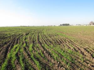 وقف ۴ هزار مترمربع زمین کشاورزی توسط نیکوکار آملی