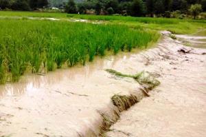 سیل حدود ۳۶ میلیارد ریال به کشاورزان و دامداران اسفراین خسارت زد