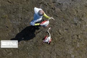 عملیات انتقال آب به دریاچه بختگان برای نجات فلامینگوها آغاز شد
