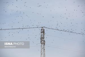 پرندگانی که برق از سر گلستانیها پراندند