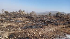 آتشسوزی در کمین طبیعت خشک بوشهر