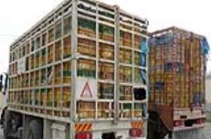 توقیف محموله ۵ تنی مرغ قاچاق در استان یزد