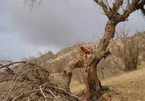خشک شدن باغات روستای دهدر طالقان
