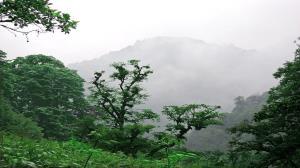 دستور رئیس کل دادگستری گیلان برای توقف برداشت چوب از جنگلهای شفت