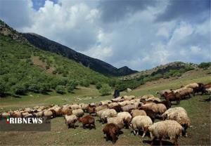 کاهش ۶۵ درصدی تولید علوفه در کردستان