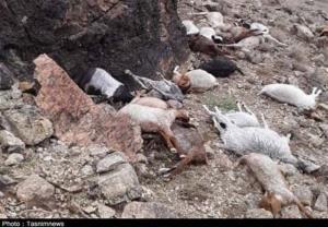 ۵۰۰ رأس دام در بارندگیهای اخیر حاجیآباد تلف شدند
