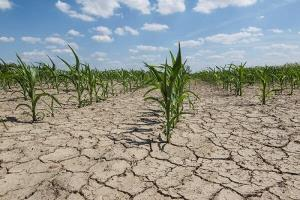 خسارت ۴۴۰۰ میلیاردی خشکسالی به کشاورزی لرستان