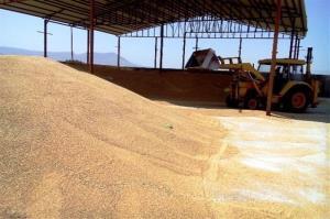 خرید تضمینی گندم در خراسان رضوی آغاز شد