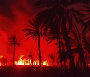 ۸۰۰ نخل مثمر در اروندکنار در آتش سوخت