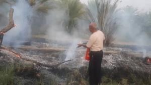 آتشسوزی نخیلات