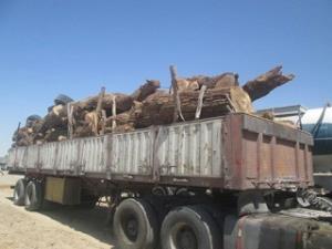 کشف ۱۰ تن چوب قاچاق در سلطانیه