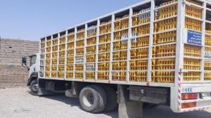 کشف بیش از ۱۲ تن مرغ قاچاق در شازند