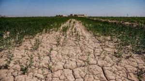 خسارت ۶ هزار میلیارد تومانی خشکسالی به کشاورزی کردستان