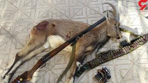 بازداشت ۲ شکارچی خلافکار در طبس