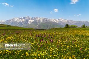 عکس/ طبیعت حیرت انگیز منطقه پیچه بن الموت