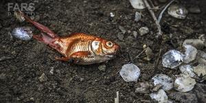 حامیان محیطزیست نهاوند هزاران ماهی را از مرگ نجات دادند