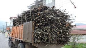 کشف ۲ تن چوب قاچاق در کویر دامغان