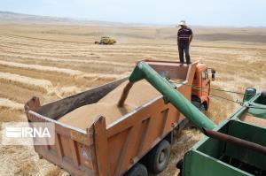 برداشت کلزا و جو در مزارع گنبدکاووس پایان یافت