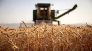 افزایش ۷۰ درصدی قیمت خرید تضمینی گندم در خراسان شمالی