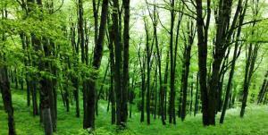 سخنگوی قوه قضاییه: موقوفه بودن جنگلهای آقمشهد نقض شد